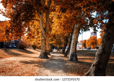 Brightly colored tree-lined Avenue in a Park