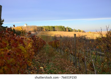 Brightly lit grape leaves in fall with changing colors of red and golden yellow with a castle background.