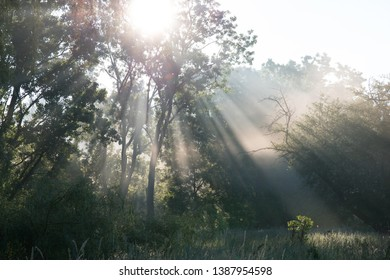 Brighton, Michigan/USA-June 2017:   Sun rays pour through summer trees in dewy morning field.