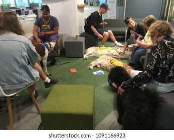 Brighton UK, May 2018 dogs cuddling session aiming to reduce stress and anxiety for students and staff during exam time at a university