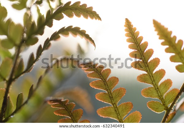 Brilliance Autumn Fern Close-up of Leaves