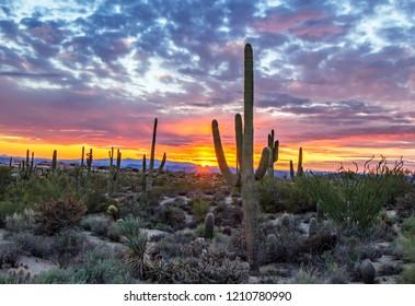 Brilliant AZ Desert sunset with saguaro cactus in North Scottsdale