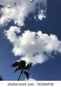 Brilliant blue sky with clouds and palm tree