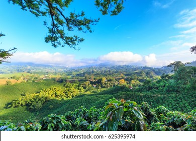 Brilliant blue sky view of a Coffee plantation near Manizales in the Coffee Triangle of Colombia.