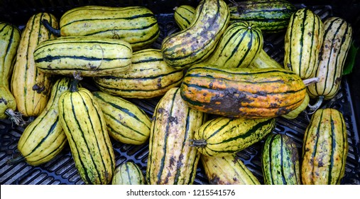 Decorative Gourd Images Stock Photos Vectors Shutterstock