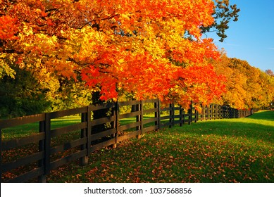 The brilliant colors of autumn line a country road