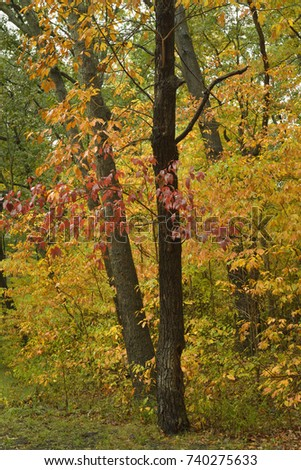 Brilliant Colors Indiana Forest Stock Photo (Edit Now) 740275633