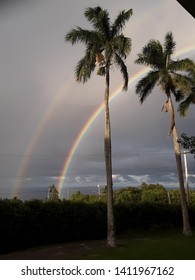 Brilliant double rainbow stretched out behind towering Royal palm trees, on a stormy Hawaii afternoon. Kohala.