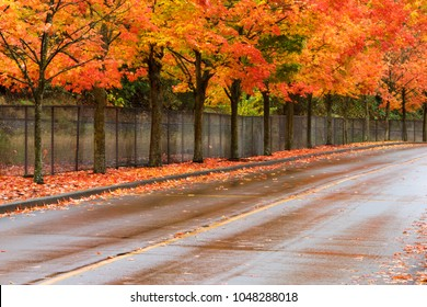 Brilliant fall foliage on row of trees in Gene Coulon Beach Park in Renton, Washington