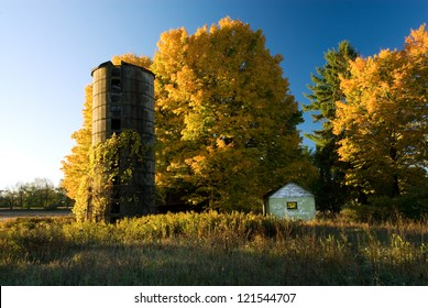 Brilliant fall-colored maples glow in the morning light at an abandoned farm site in Kalamazoo Co., Michigan