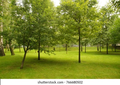 Brilliant green trees in the summer Park