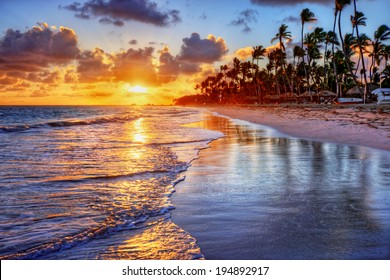 Brilliant ocean beach sunrise with palm trees