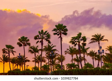 Brilliant ocean sunset with palm trees. Caribbean Aruba