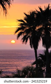 Brilliant ocean sunset with palm trees.