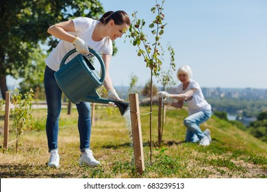 Brilliant organized woman watering young greens