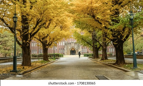 Brilliant yellow ginkgo tunnel at University of Tokyo(Todai) in autumn.