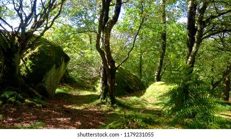Brimham Rocks woodland