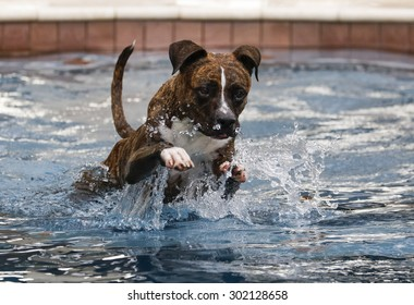 Brindle dog jumping through the water to swim