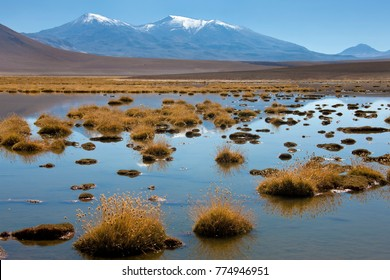 A brine lagoon high in the Andes Mountains on the altiplano in the Atacama Desert in northern Chile