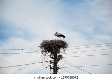Bringing new babies. Stork in stick nest on electrci pole. White stork and nestling on cloudy sky. Stork family. Large migratory bird with black and white plumage. Stork returning to nest in spring.