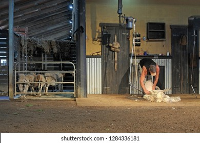 BRISBANE - JAN 11 2019:Australian farmer sheep shearing.There are around 70 million sheep in Australia, producing an average of 5kg of wool per head, and a total wool yield of 340 million kilograms.