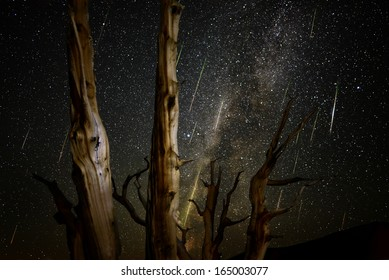 Bristlecone Pine Forest 01 Perseids Meteor Shower 2013 California USA