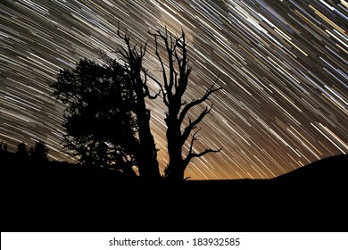 Bristlecone Pine Forest Star Trails California USA