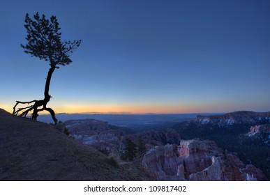 Bristle-cone Pine Sunrise at Bryce National Park, USA