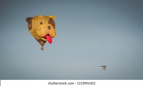 Bristol, UK - August 11, 2018: Dog shaped balloon and microlight at 40th Anniversary of the International Balloon Fiesta; hundred of balloons launching at dawn.