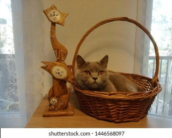 Bicycle Handlebar Bike Bell Orange Tabby Cat Face Pet Kitty