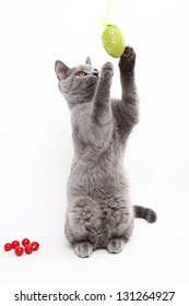 British cat playing with easter egg on white background