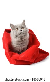 british cat in red sack isolated