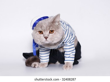 British cat in a suit of the seaman.