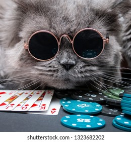 A British cat wearing round sunglasses plays poker, royal flush, casino chips. Close-up.