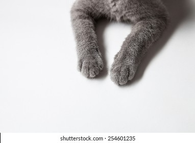 British cat's paws on white background