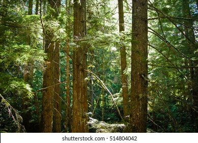 British Columbia forest with sunlight coming through