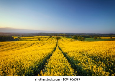 British countryside blooming rapeseed field in morning light, Shropshire, United Kingdom