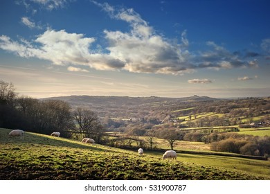 British countryside at sunset. Sheep in field on farmland near Trap, Llandeilo in Carmarthenshire, Wales, UK.