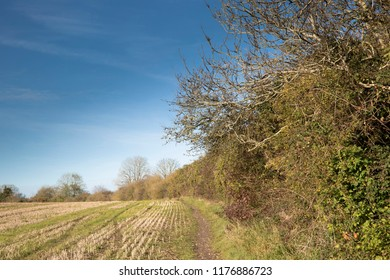 British hedgerow alongside a ploughed field and with blue sky in Autumn in Hampshire, UK