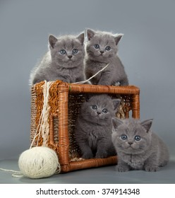British kitten with a ball of wool in basket