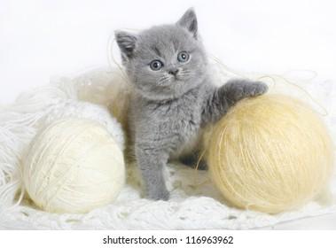 British kitten with balls of wool.