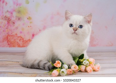 British kitten with flowers