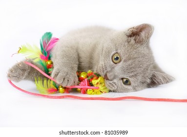 British kittens with toy on white background