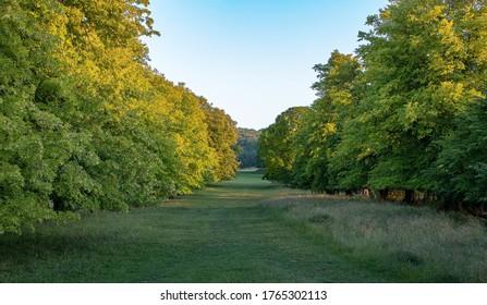 British landscape. Tree alley in Tring park, Buckinghamshire.