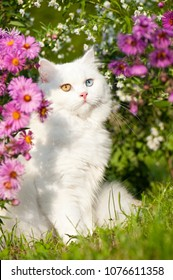 British longhair cat in a flower garden