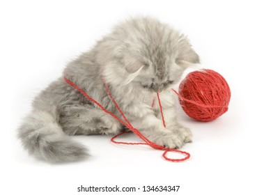 british longhair kitten playing with red clew, over white background