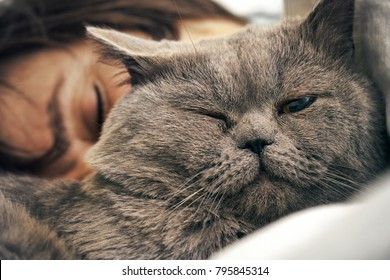 British short hair cat lying with  sleeping woman