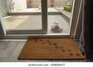 A British Short Hair cat sitting on the decking area of a garden in Edinburgh, Scotland, UK, where a door mat with cat paw prints can be seen on the foreground beside a patio door.