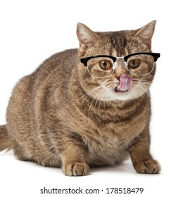 British shorthair cat on a white background. cat with glasses isolated on white