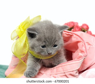 British Shorthair kitten with yellow bow and in pink bag